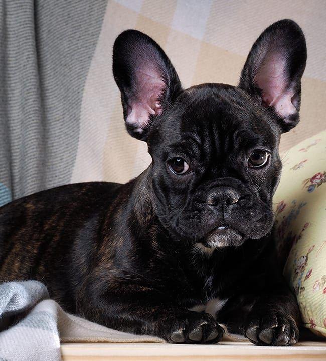 Koutek pro domácí zvířata | Nábytek a doplňky vybrané stylistkami Westwing