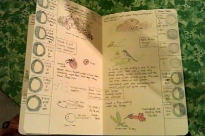 Lovely notebooks - the one pictured shows the phases of the moon - every evening for a month this mom took her kids out after bedtime stories so they could draw the moon...