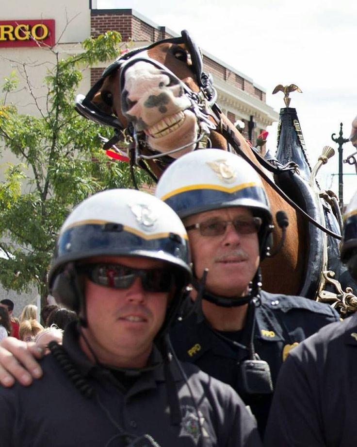 Norristown, Pennsylvania – At a 9/11 Memorial Heroes Run, a Clydesdale photobombed a group of officers posing for a photo. Kim Supko, of Kim Supko Photography, captured the hilarious moment o…