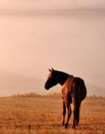 Buying/ a Horse Checklist: 11 Must-Know Tips