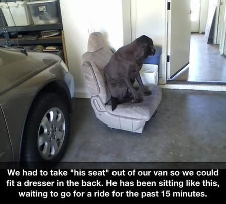 Best Dogs Shaming Images On Pinterest Friends Dogs And - 15 times dogs realized they were going to the vet instead of the park their reactions are priceless
