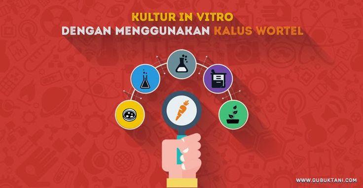 Kultur In Vitro Dengan Menggunakan Kalus Wortel