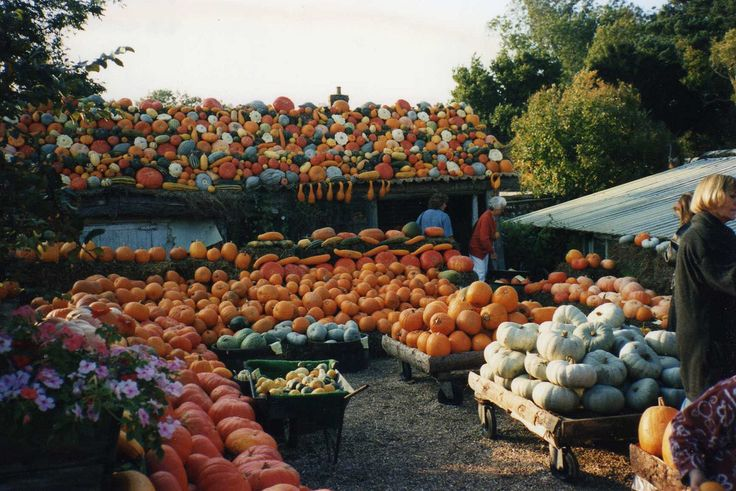 Photo Essay: Incredible Pictures of Pumpkin Patches