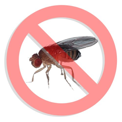 PEST CONTROL TIP TUESDAY!  1.Get rid of the old fruit. Rinse out the debris in your trash can and clean your drains as #fruitflies can use the gunk in these places as a food source.  2.Trap the adults using a fruit fly trap like the Natural Catch or the Vector Fruit Fly Trap. Traps will help monitor your progress and will take adult fruit flies out of the breeding pool. 3.Spray an IGR around the cracks and crevasses to stop the juvenile flies from maturing.