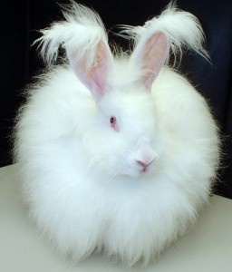 This looks exactly like my Charlie!  RIP Charlie, you were a good bunny!