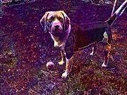 """New artwork for sale! - """" Beagl Dog Pet Ball Out Play  by PixBreak Art """" - http://ift.tt/2upvrKt"""