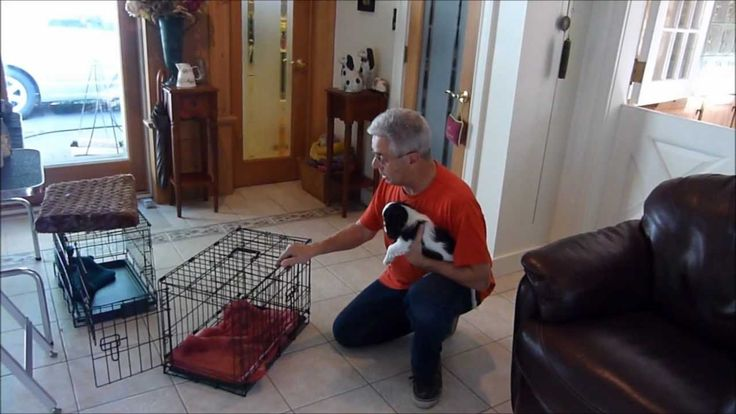 How to Housebreak a Puppy Using the Crate.  Good education about different crates.  https://www.facebook.com/pages/Labrador-Dog-Community/876646469028039
