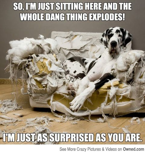 Great Dane memes - Google Search: Great Danes, Funny Dogs, Dogs Humor, Too Funny, Funny Stuff, Funny Animal, Dogs Funny, Bad Dogs, Big Dogs