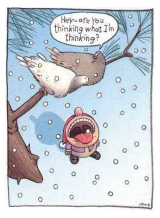 hehe: Funny Cartoon, Christmas Cards, Funny Pics, Funny Pictures, Funny Christmas, Funny Birds, Funny Commercial, Funny Quotes, Funny Stuff