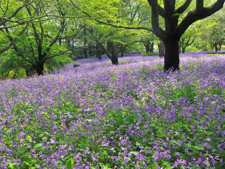 心を癒す美しい花の画像13