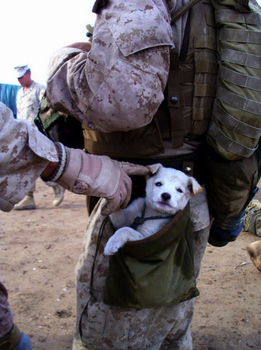 pocket puppy!!: Friends, Dogs, Soldiers, Little Puppies, Pet, Marines, Pockets, Small Puppies, Animal