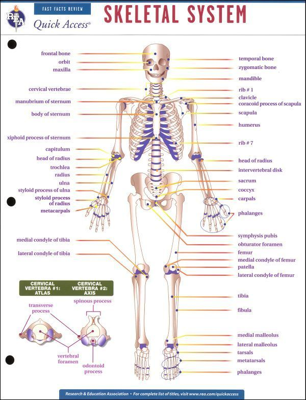 29 Best Images About Radiology On Pinterest Skeletal And