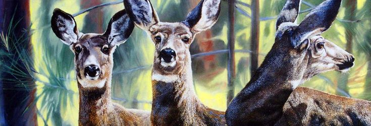 Бог создал животных, чтобы отогревать наши холодные сердца... Художник самоучка Andrew Kiss