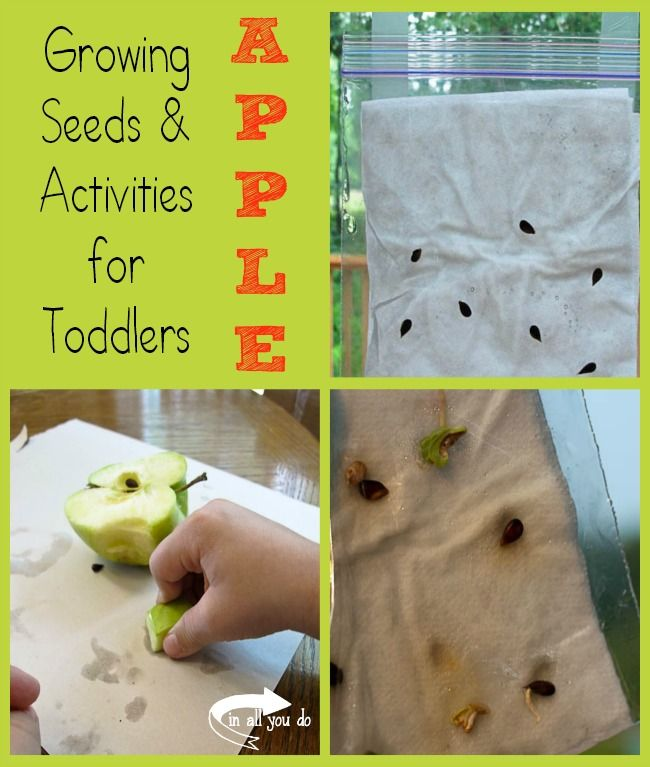 Growing Seeds & Apple Activities for Toddlers