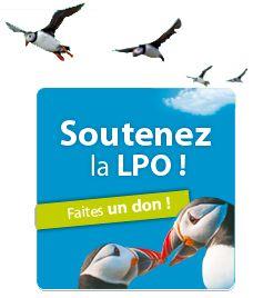 L'hiver est là ! Donnez un coup de pouce aux oiseaux ! - Newsletter LPO - Boutique LPO - Ensemble préservons la Nature - Ligue pour la Protection des Oiseaux
