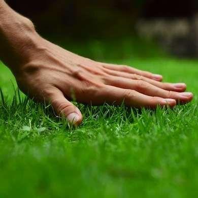 Spring Lawn Care - 7 Best Steps to Start the Season - Bob Vila