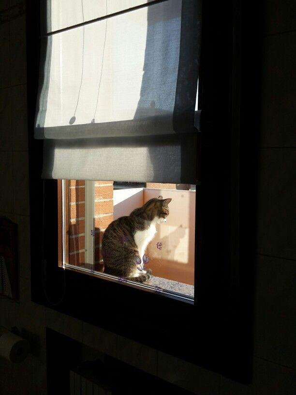 Un gatto alla finestra.