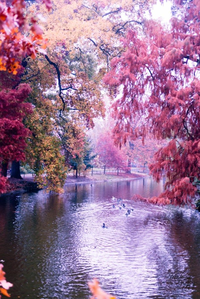 Le Jardin Public De Bordeaux Dans Le Brouillard Automnal Jardin
