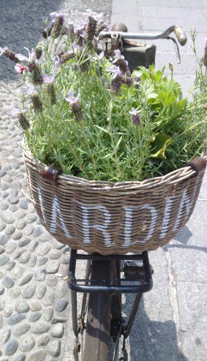 Bike basket full of lavender in Via Santa Croce, Milan