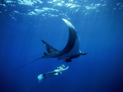Scuba Diving with Giant Manta Rays, Mexico