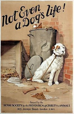 Vintage Rspca Animal Cruelty Awareness Dog Neglect Poster A3 Print