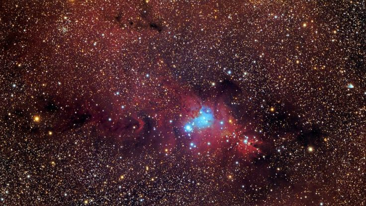 4 March 2017 | NGC 2264 Complex