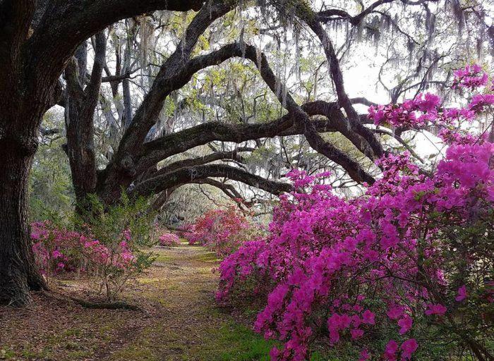 e7e6b6459e97beba79f14521c3446fc7 - Magnolia Plantation And Gardens Savannah Ga