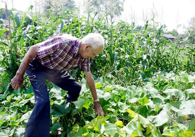 95-year-old Robert Johnston tends to squash in the backyard garden at his North Strabane Township home.