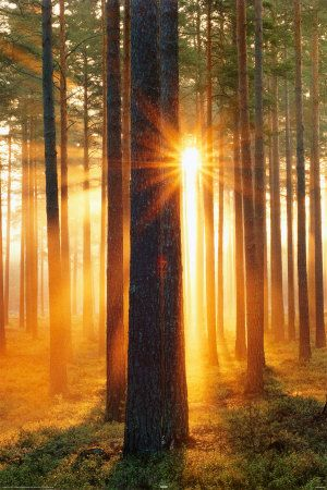 sunrise through the forest