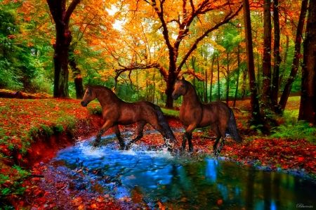 *Ride to the autumnal forest* - two, autumn, splendor, nature, free, landscapes, forest, horses, brown, ride to the woods, seasons, river, hdr, hq