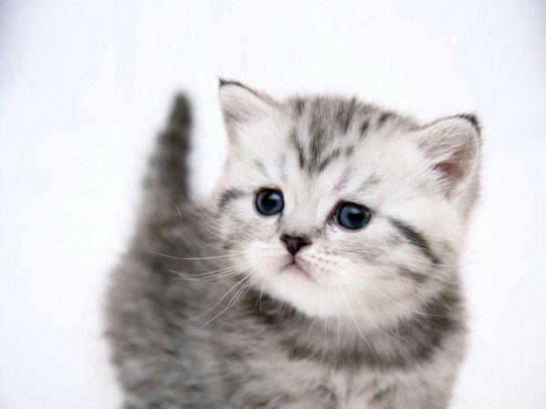 """Aydın Hayvanları Koruma Derneği Başkanı açıkladı: """"Kedi yavruları en az 8 hafta anne sütü ile beslenmeli""""  Detaylar ajanimo.com'da.. #ajanimo #ajanbrian #hayvan #animal #kedi #cat"""