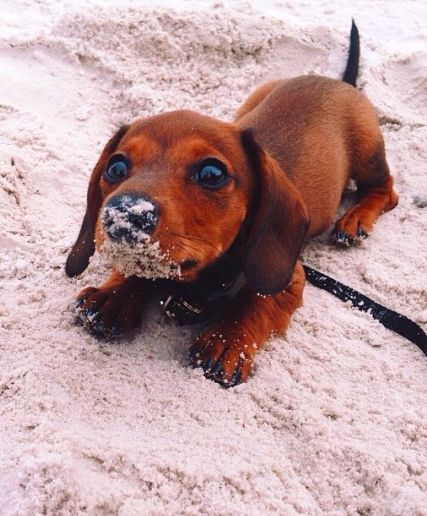 Best Cute Images On Pinterest Baby Animals Best Friends And Dog - 29 cutest dog photos existence