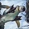 Honda's Thin-Film Solar Panels Provide Power for Penguins at the Aquarium of the Pacific Penguin Habitat at Aquarium of the Pacific – Inhabitat - Sustainable Design Innovation, Eco Architecture, Green Building