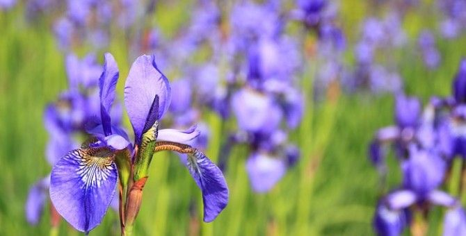 Most Costly Flowers in World (4 of 4)