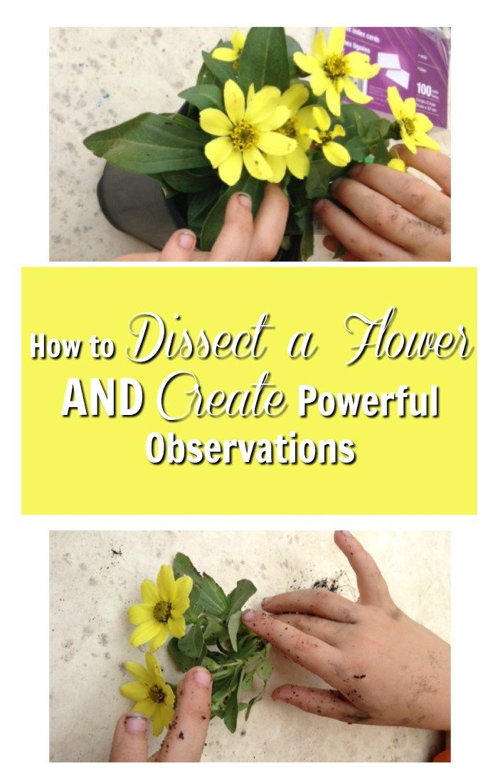 How to dissect a flower and create powerful observ…