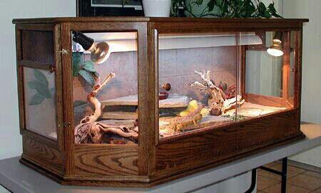 Love This Enclosure Bearded Dragon Pinterest