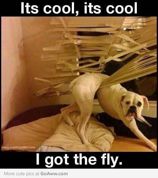 Funny - when it's someone else's dog .. and house ;-).....omg!!!! Exact same thing happened to my blinds via our boxer dexter...missing my baby