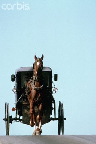Amish Buggy - Pennsylvania. there are days I miss these since moving to a city.