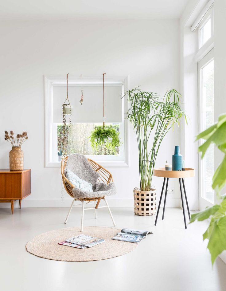 papyrus plant // paraplu plant