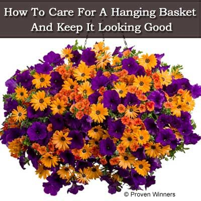 How To Care For A Hanging Basket And Keep It Looking Good