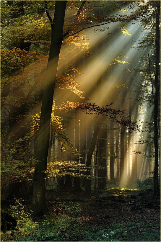 Lichtstrahlen im Eifelwald von Ingrid Lamour