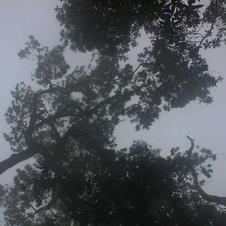 Jungle fog. Mount Rinjani Lombok Indonesia #fog #mist #jungle #trees #hiking #rinjani #gunung #gunungrinjani #pendaki #pendakiindonesia #mountains #nature #naturelovers #lombok #indonesia #wonderfulindonesia