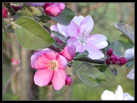 Rośliny i ogród, Kwiatowo, zielono, radośnie... - Wyczekane, wytęsknione wiosenne kwiaty.