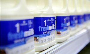 Dairy farmers target Morrisons in protest at milk prices | Environment | The Guardian