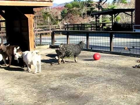 Goat Games