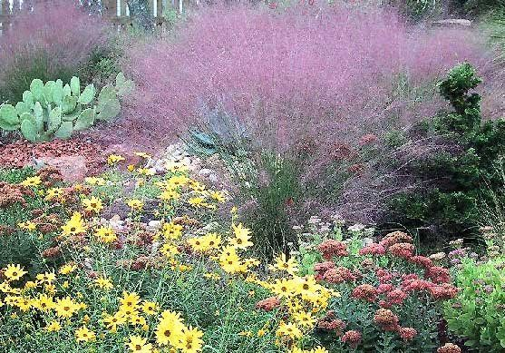 Xeriscape landscaping google search poolside plants for Xeriscape images