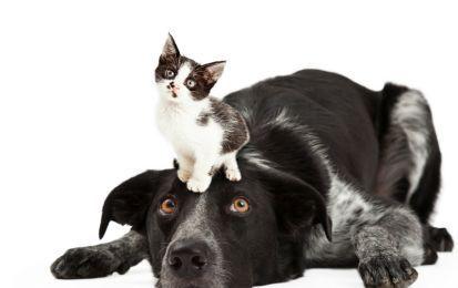 Come realizzare un repellente naturale per cani e gatti - Come realizzare un repellente naturale per cani e gatti? Ecco alcuni preziosi consigli in merito.
