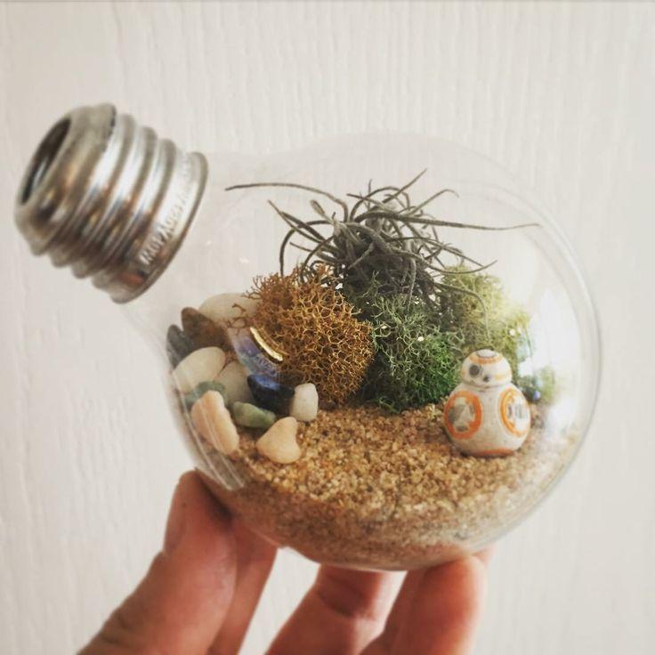 BB8 Micro Machine with Air Plant Terrarium in Light Bulb by Krysten Burton