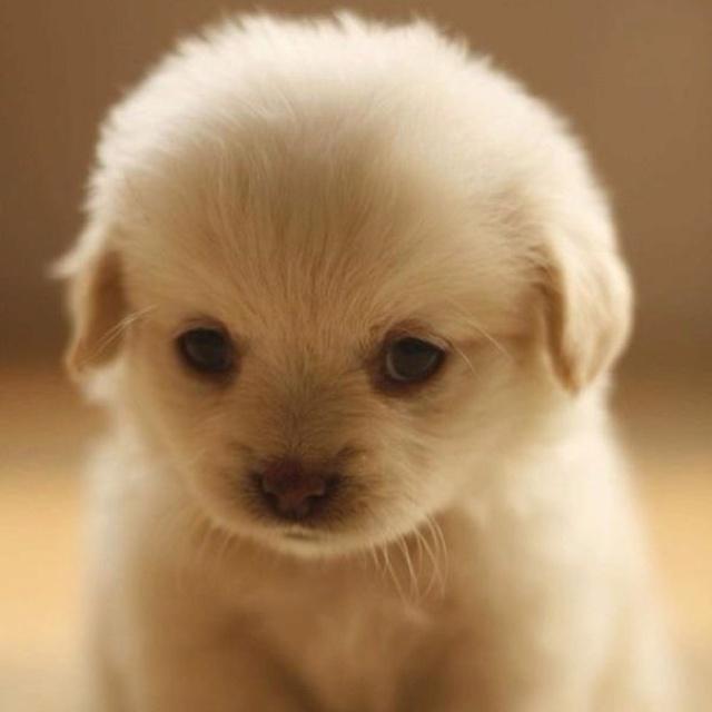 Beautiful Love Anime Adorable Dog - e7eb81a854b980409834ad92b4b46e19--puppys-adorable-animals  Collection_487496  .jpg