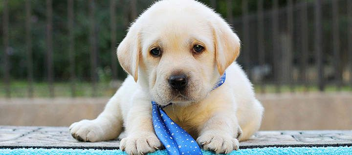 10 Popular Male Dog Names Popular Male Dog Names Dog